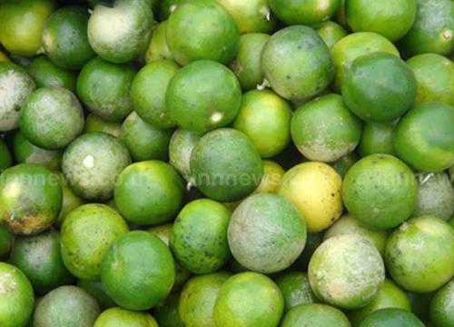 มะนาวเขมรตีตลาดมะนาวไทยหลังมีราคาแพง
